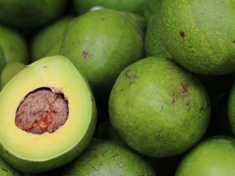 Avocado Invriezen