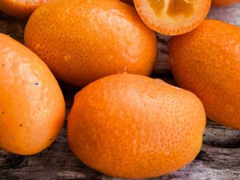Kumquats invriezen