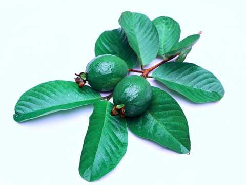 Guave invriezen